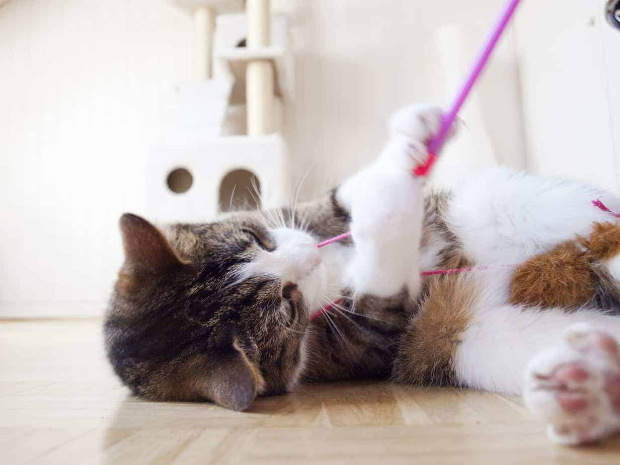 Cat fishing – the ideal toy for cats