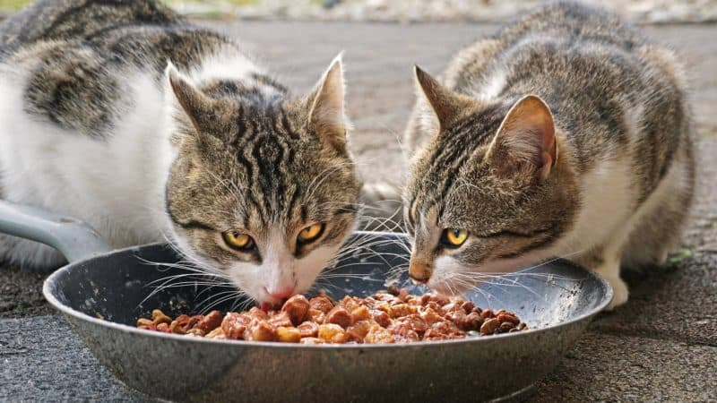 Which cat food is really recommended?