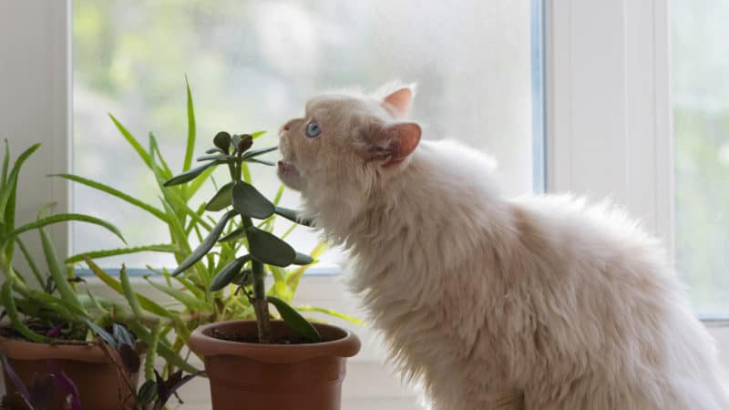 Toxic plants and foods for cats