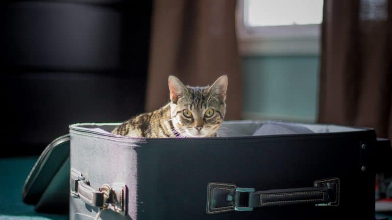 What will happen to our cats on holiday?