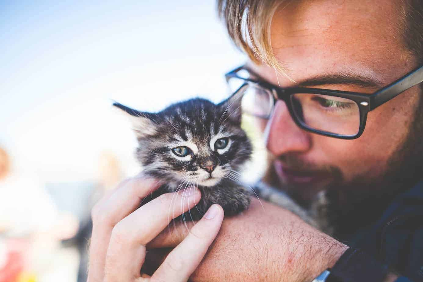 Welche Katze passt am besten zu mir?